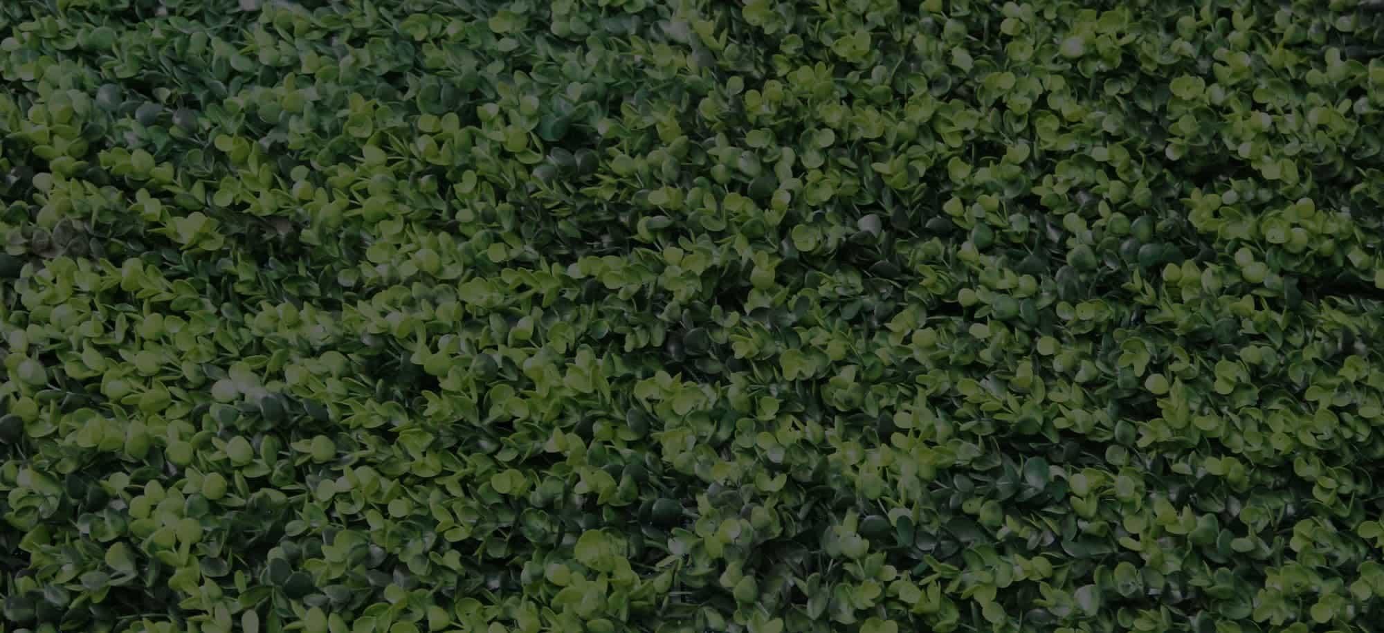 Contacto te quiero verde muros verdes naturales y for Muros verdes naturales