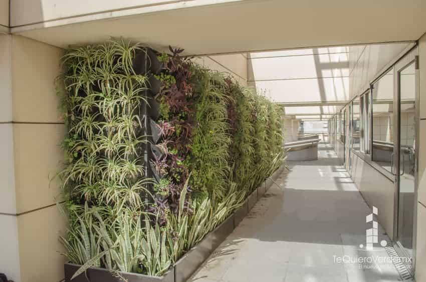 Muros verdes naturales te quiero verde for Muros verdes naturales